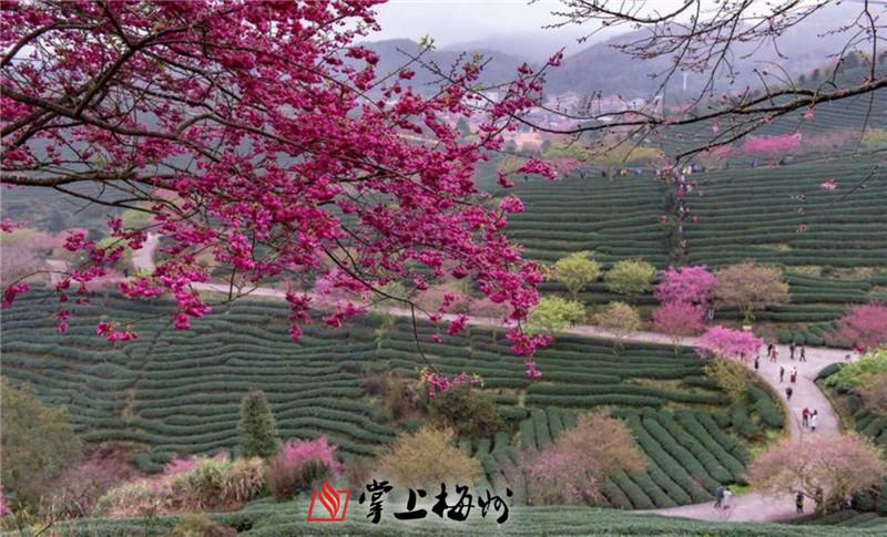 东湖风景区景中村改造