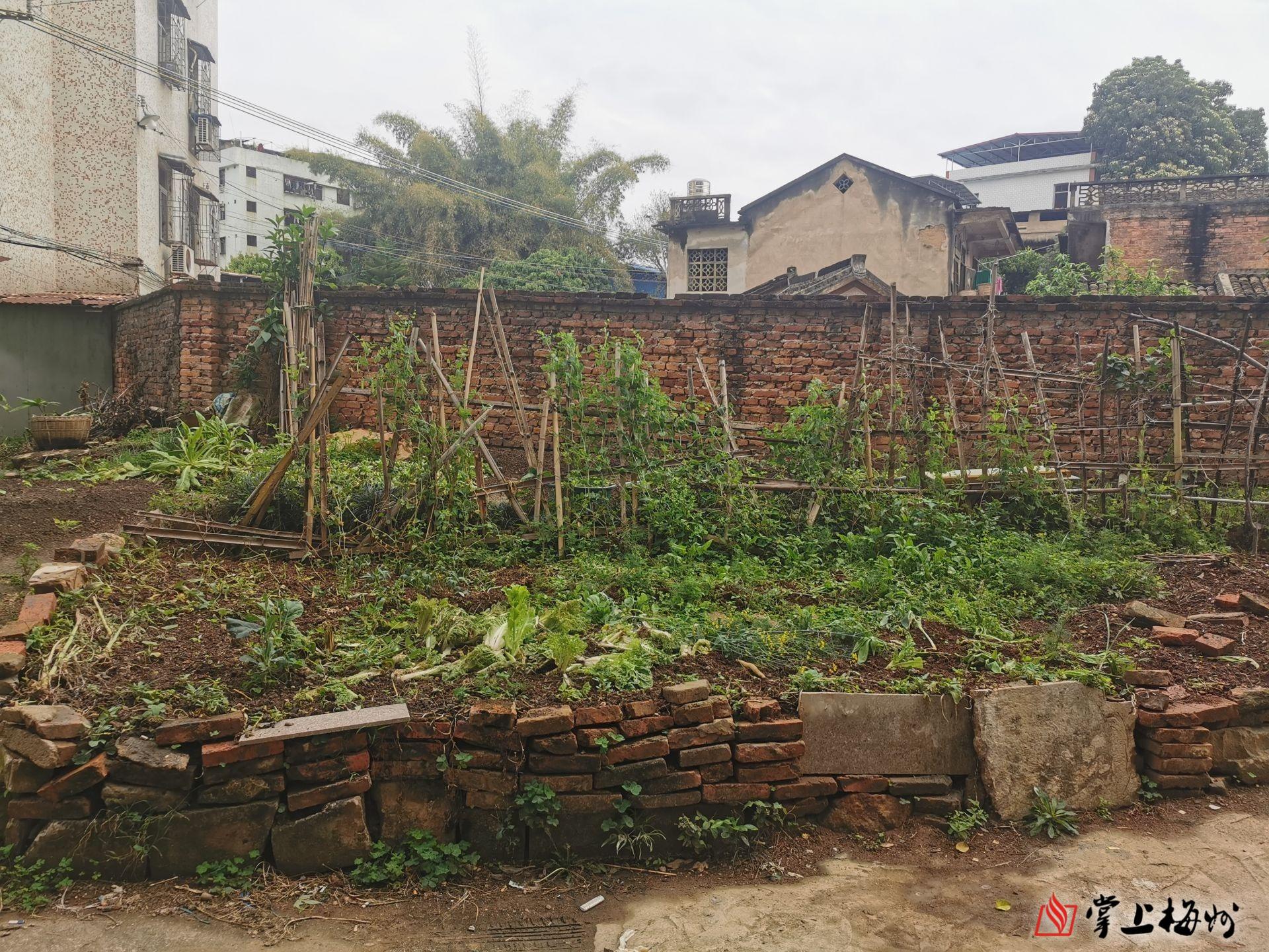 """公共綠化帶竟成私家""""菜園地""""?梅州這個小區住戶太鬧心!"""