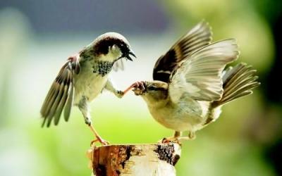 鸟类为什么没有牙齿?中美科学家找到原因了