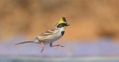 新研究说气候变化导致鸟类体型变小