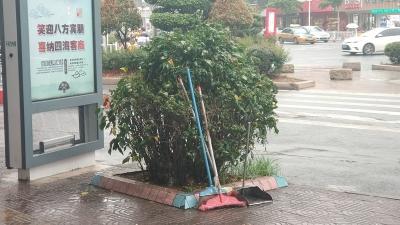 无处安放的拖把,绿化树上直接挂?煞风景!