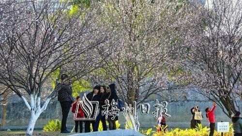 宋代大诗人杨万里与梅州丨杨万里咏梅诗与梅州得名