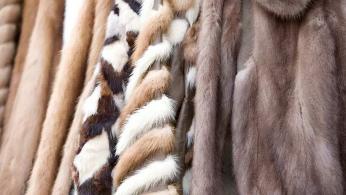 中国游客携藏羚羊毛披肩出境被印度海关起诉 我使馆回应