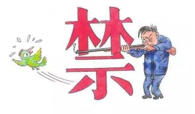 省政府出台规定,广东明年起5年禁猎野生鸟类!