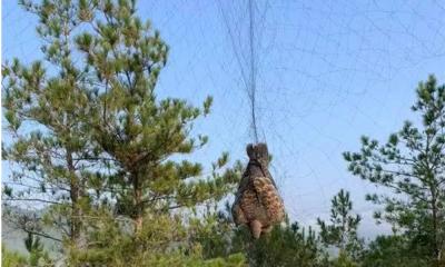 为补身子,梅县一男子在林间撒网捕鸟!警方:罚!