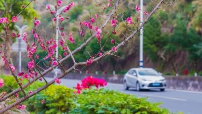 """美!梅县区""""扮靓""""旅游公路 四季开花为城乡增色"""