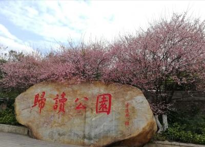 花开迎春 香飘梅州