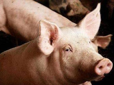 下半年猪肉价格要大涨?官方回应来了!