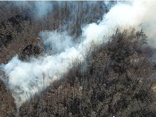 内蒙古阿尔山发生森林火灾,446人参与扑救