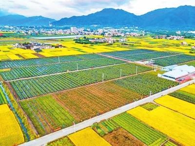学习笃行|推进农业现代化 关键在科技创新