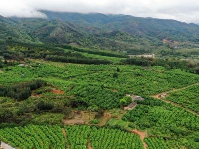 省农业农村厅调研组来梅:做强特色产业 带动富民兴村