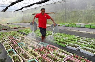 """打造""""城市后厨""""!走进五华县盆栽蔬菜种植基地"""