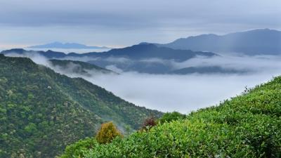 每日一景丨清凉山中享清凉,云雾环绕云雾茶