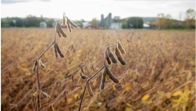 受贸易摩擦影响,我国大豆、猪肉进口有啥变化?