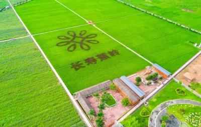 蕉岭特色丝苗米产业如何发展?行业大咖这样说