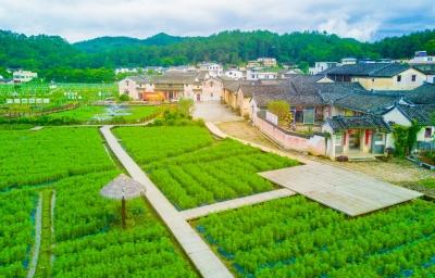 梅州唯一!大埔北塘村入选首批全国乡村旅游重点村
