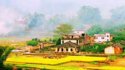 每日一景丨金色的田野,收获的季节