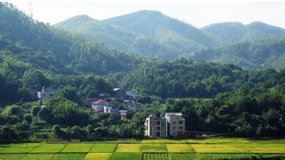 每日一景丨平远大柘丰光村,山村新貌美如画