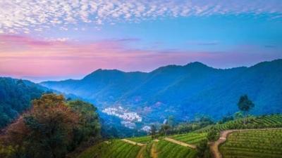每日一景丨灵光寺景区,茶山风景入画来