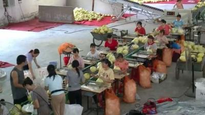 湖北松滋市领导到大埔考察蜜柚产业发展情况