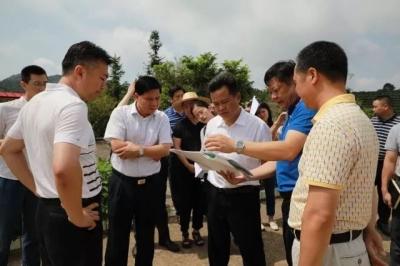 大埔县委书记朱汉东、县长熊锋松到枫朗镇调研