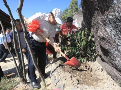 丰收喜悦 | 陈宗懋院士在丰顺韩山种下茶树!