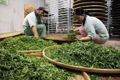 """""""粤茶杯""""评审结果出炉啦!梅州三茶企上榜,这些茶你喝过吗?"""