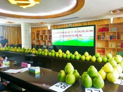 别错过!今年梅县这十个柚园的柚子最好吃