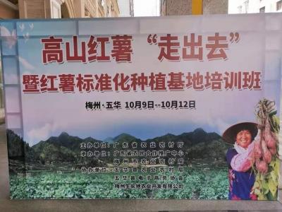 """如何让高山红薯""""走出去""""!在五华举行的这个培训班来教您"""