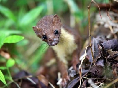 人工养殖的野生动物如何处理?建设国家储备林有什么意义?这儿有答复 ↓