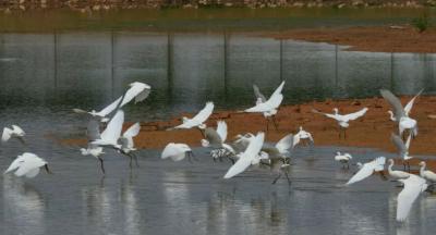 【有奖问答】在梅州,保护野生动物可以这么做…