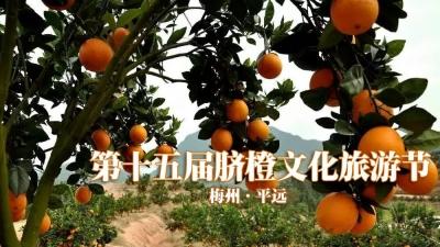 """直播回顾丨""""橙心橙意""""待你来!今天,来平远吃橙吧~"""