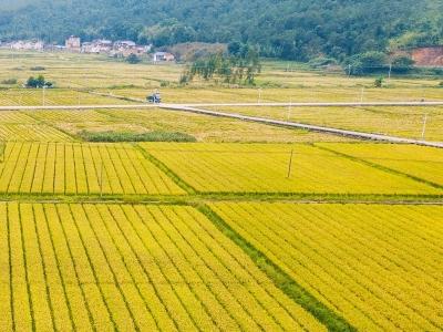 13277亿斤!2019年全国粮食总产量再创新高