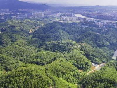 民生沟通丨生态林主要有哪些?