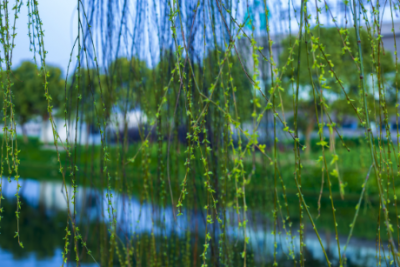 """梅州·文艺战""""疫""""丨小小说《天亮了,春来了》"""