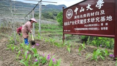 """省内最大的名贵药材""""白及""""种植基地,在蕉岭这小山村里!来看农户如何增收致富..."""