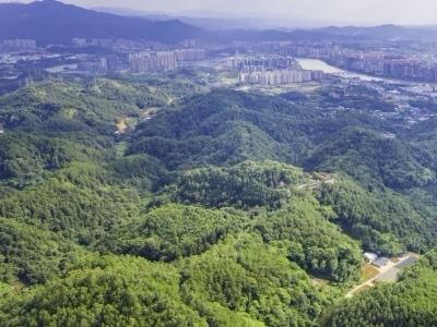 民生沟通丨集体山林被人破坏应该如何处理?