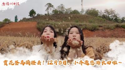 梅州V视丨赏花登高摘橙去!12月5日,小乔邀您游长田啦~