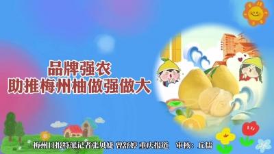 梅州V视丨聚焦第十八届中国国际农交会梅州展区:品牌强农 助推梅州柚做强做大