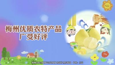 梅州V视丨聚焦第十八届中国国际农交会梅州展区:梅州优质农特产品广受好评