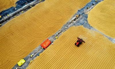 糧食生產再獲豐收!2020全國糧食總產量13390億斤