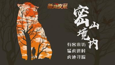 直播丨黑龙江密山:直击东北虎下山进村