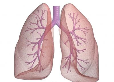 """早癌筛查系列科普丨关注你的""""肺"""" 呵护肺健康"""