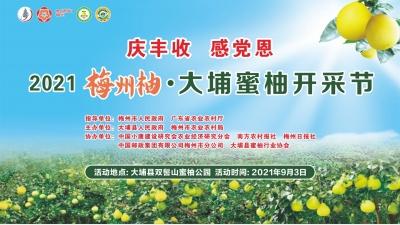 """直播回顾丨""""柚""""是一年丰收季!2021梅州柚·大埔蜜柚开采节今日启幕"""
